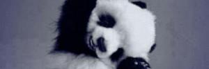 pandafriday